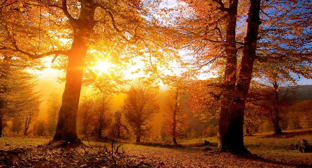 Fall-Sunrise[1]
